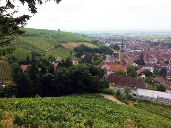 weinblog_ribeauville